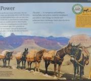 Grand Canyon-NP-74