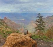 Grand Canyon-NP-79