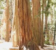 Yosemite-30