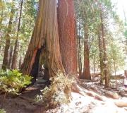 Yosemite-31