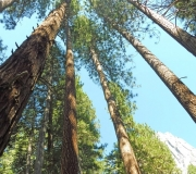 Yosemite-55