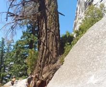 Yosemite-23