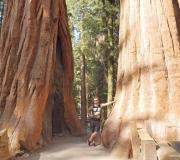 Sequoia-36