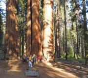 Sequoia-46