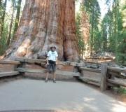 Sequoia-21