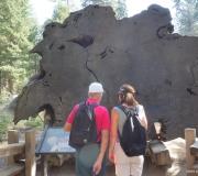 Sequoia-35