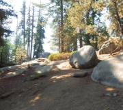 Sequoia-13