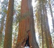 Sequoia-16