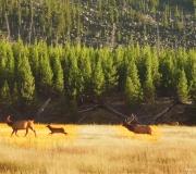 Yellowstone-176