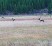 Yellowstone-21-1