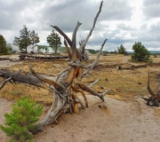 Yellowstone-127