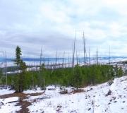 Yellowstone-48