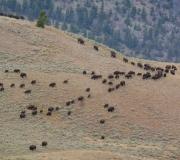 Yellowstone-55
