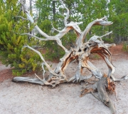Yellowstone-99